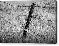 Barb Wire Fence In Infrared Blackand White Acrylic Print by Randall Nyhof