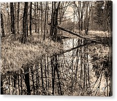 Acrylic Print featuring the photograph Bare Bones by Betsy Zimmerli