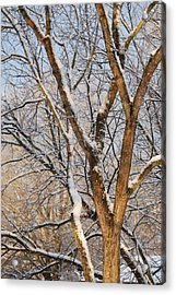 Bare Branches Acrylic Print by Trudi Southerland