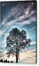 Bare Sunset Acrylic Print
