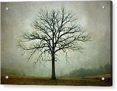 Bare Tree And Fog Acrylic Print by Dave Gordon