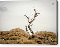 Bare Tree Acrylic Print by Bernard Jaubert