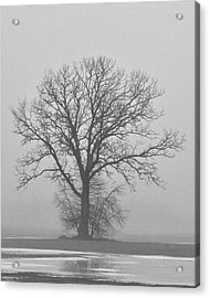 Bare Tree In Fog Acrylic Print