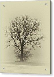 Bare Tree In Fog- Nik Filter Acrylic Print by Nancy Landry