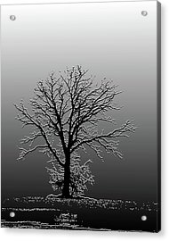 Bare Tree In Fog- Pe Filter Acrylic Print by Nancy Landry