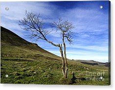 Bare Tree In The Mountain. Auvergne. France Acrylic Print by Bernard Jaubert