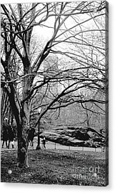 Acrylic Print featuring the photograph Bare Tree On Walking Path Bw by Sandy Moulder