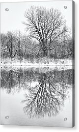 Acrylic Print featuring the photograph Bare Trees by Darren White