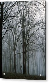 Bare Trees In Misty Forest, Finger Acrylic Print