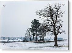 Bare Trees In The Snow Acrylic Print