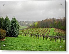 Bare Vineyard Acrylic Print