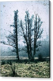 Bare Winter Trees Acrylic Print