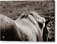Acrylic Print featuring the photograph Bareback by Angela Rath