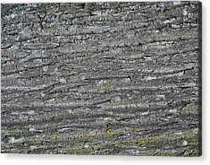 Acrylic Print featuring the photograph Bark In The Woods by Ron Read