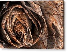 Barking Rose Acrylic Print by Nicolas Raymond