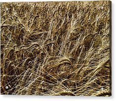 Acrylic Print featuring the photograph Barley by RKAB Works