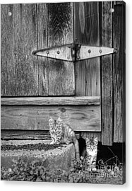 Acrylic Print featuring the photograph Barn Cats by Pete Hellmann