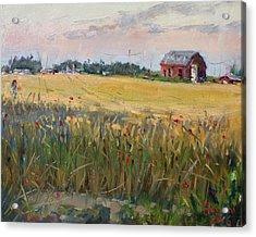 Barn In A Field Of Grain Acrylic Print by Ylli Haruni