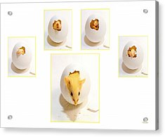 Barn Mouse Acrylic Print