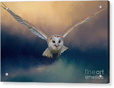 Acrylic Print featuring the photograph Barn Owl In Flight by Eva Lechner