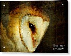 Barn Owl Acrylic Print by Lois Bryan