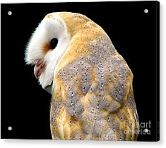 Acrylic Print featuring the photograph Barn Owl by Rose Santuci-Sofranko