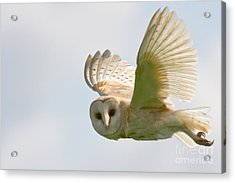 Barn Owl Acrylic Print by Ruth Hallam