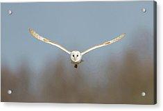 Barn Owl Sculthorpe Moor Acrylic Print
