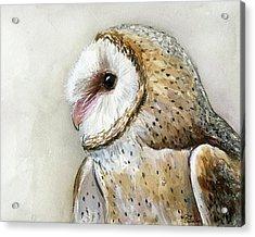 Barn Owl Watercolor Acrylic Print by Olga Shvartsur