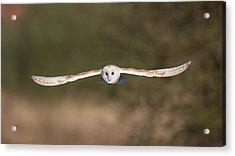 Barn Owl Wingspan Acrylic Print