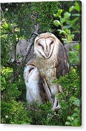 Barn Owls Acrylic Print by George Jones