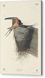 Barn Swallow Acrylic Print by Anton Oreshkin
