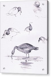 Barnacle And White Fronted Geese Acrylic Print by Archibald Thorburn