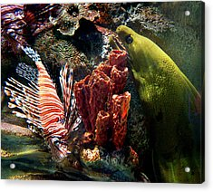 Barnacle Buddies Acrylic Print by Bill Pevlor