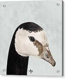 Barnacle Goose Portrait Acrylic Print