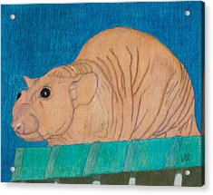 Barney Acrylic Print
