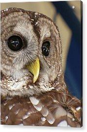 Barney The Owl Acrylic Print