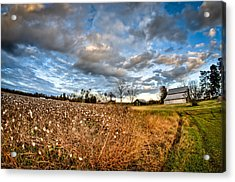 Barns And Cotton Acrylic Print