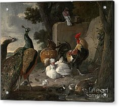 Barnyard Fowl And Peacocks Acrylic Print by MotionAge Designs