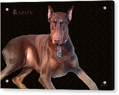 Baron Acrylic Print