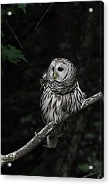 Acrylic Print featuring the photograph Barred Owl 2 by Glenn Gordon