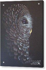 Barred Owl 2 Acrylic Print by Laurianna Taylor