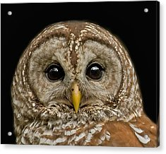 Barred Owl Fledgling Acrylic Print by Larry Linton