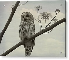 Barred Owl On A Tree Acrylic Print by Dan Sproul