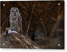 Acrylic Print featuring the photograph Barred Owl On Log by Michael Cummings