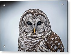 Acrylic Print featuring the photograph Barred Owl by Paul Freidlund