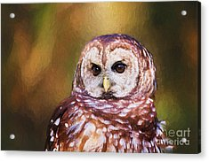 Barred Owl Portrait Acrylic Print