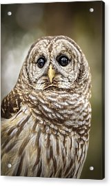 Acrylic Print featuring the photograph Hoot by Steven Sparks