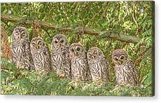 Barred Owlets Nursery Acrylic Print