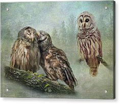 Acrylic Print featuring the photograph Barred Owls - Steal A Kiss by Patti Deters